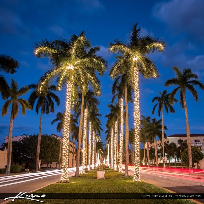 Christmas lights on palm trees along the road on Palm Beach Island, West  Palm Beach, Florida. HDR tone mapped image created in Photomatix Pro and  Topaz ... - Christmas Lights On Palm Trees Along The Road On Palm Beach Island
