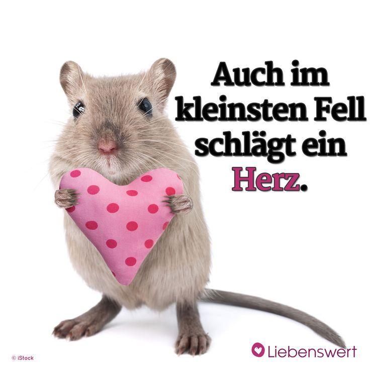 Photo of Sprüche für Tierliebhaber