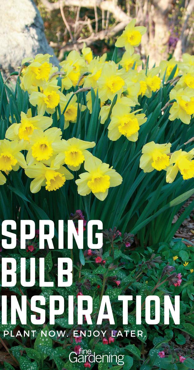 12 Spring Bulb Designs To Plant Now Garden Bulbs Spring Bulbs Plants