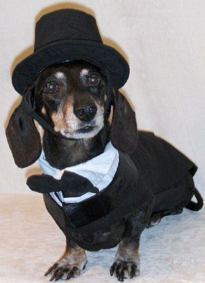Black Dachshund Dog Large Tuxedo With Tails Top Hat And Bow Tie
