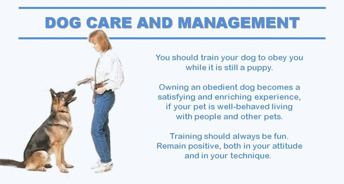 Want To Know More About Cool Dog Training Look At The Dog For