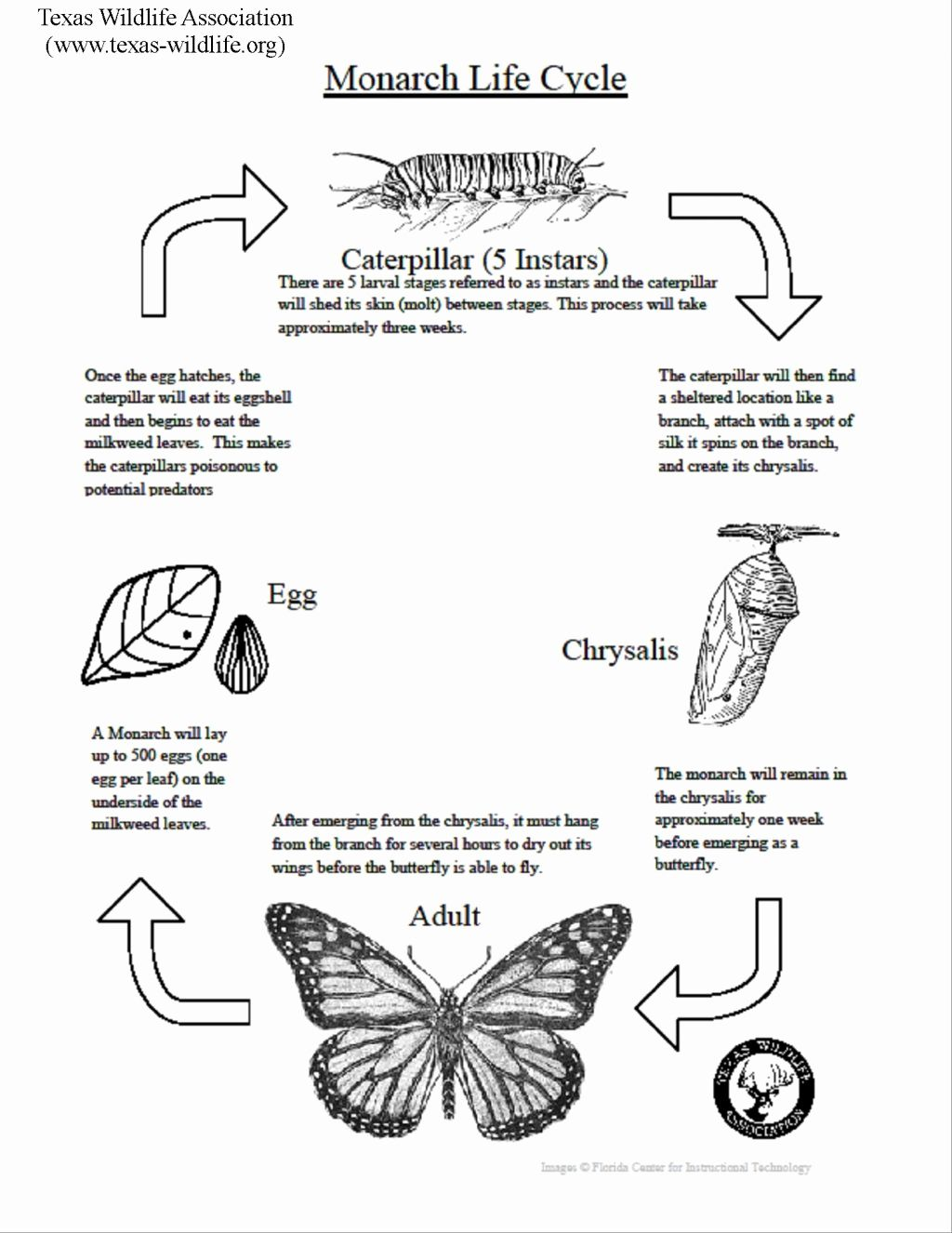 Butterfly Coloring Pages Adults Best Of Coloring Pages