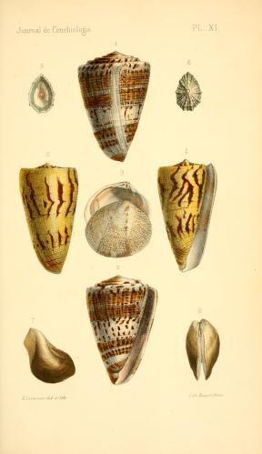1857 I Journal de conchyliologie