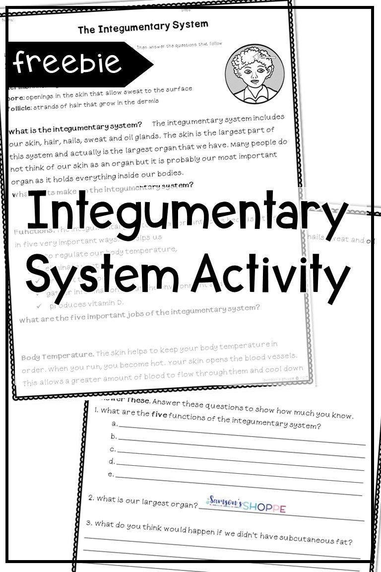 Integumentary System Worksheet Grade 6 - worksheet
