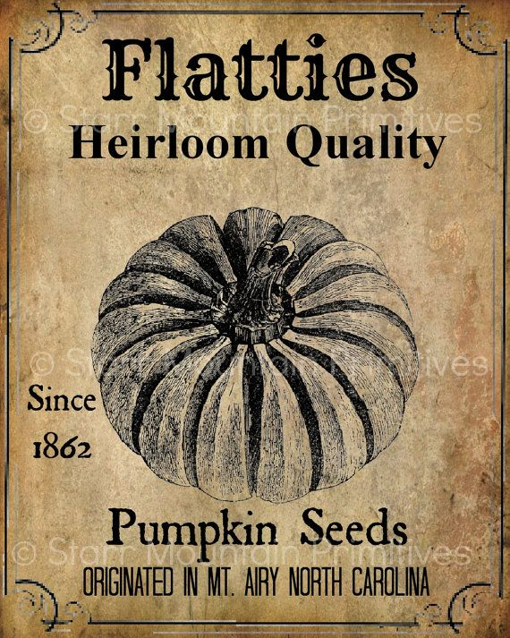 Primitive Vintage Fall Autumn Pumpkin Seeds Jpeg Digital Image Great