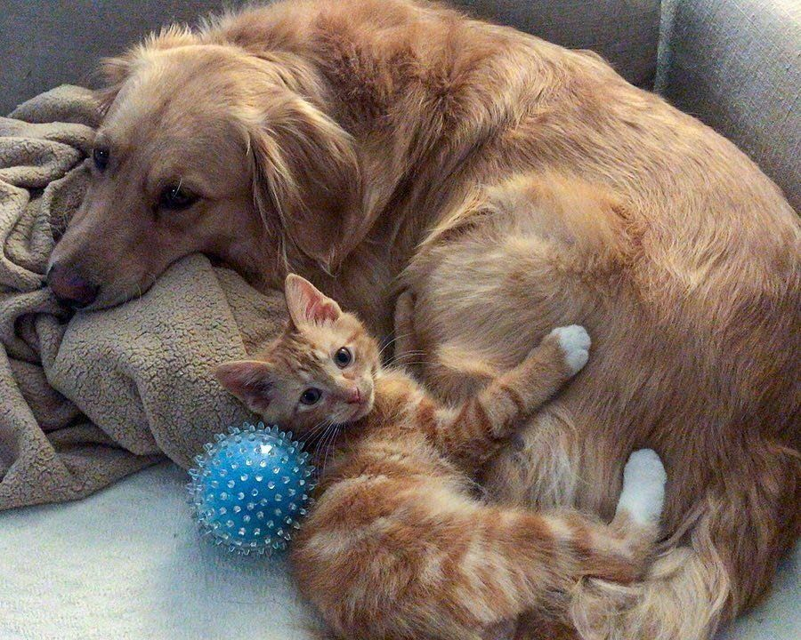 Kitten Rescued From A Van In Parking Lot Finds His Perfect Friend In A Dog Animal Shelters Near Me Kitten Rescue Kittens Animal Shelters Near Me
