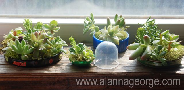 Marvelous How To | Motheru0027s Day Recycled Windowsill Mini Planter