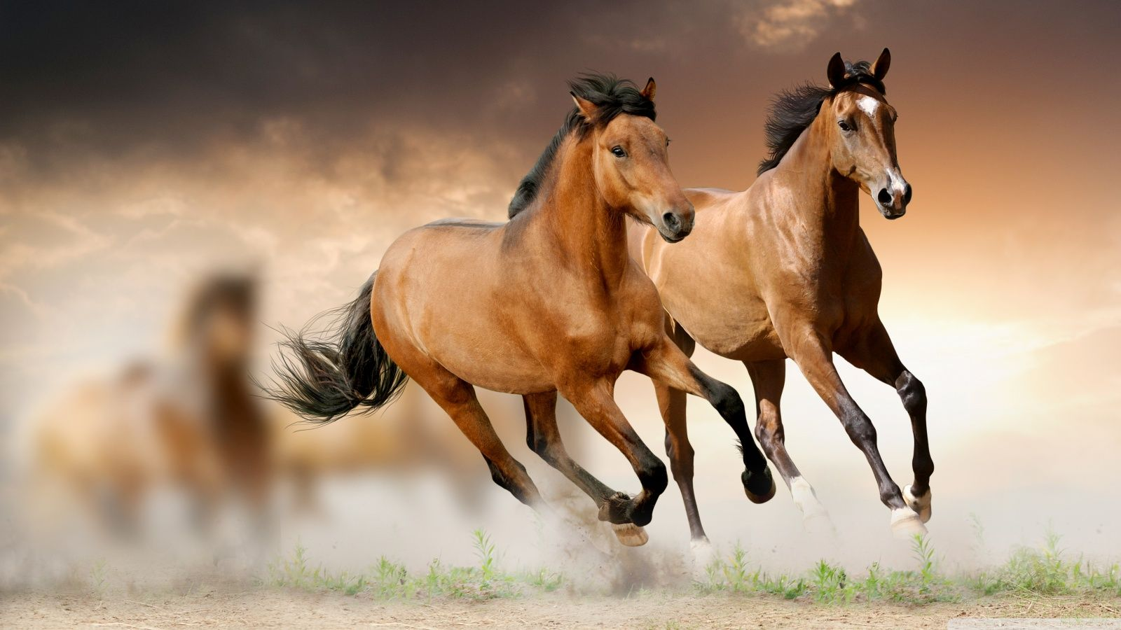 Outstanding Horse Pictures To Share Horses Hd Wallpapers Great Horses Hd Animal Wallpapers Horse Wallpaper Wild Horses Running Beautiful Horses