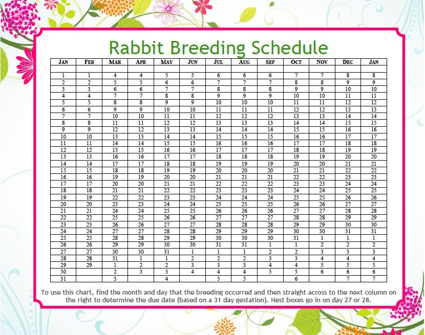 Rabbit Due Date Calculator | Animals/pets | Rabbit breeds