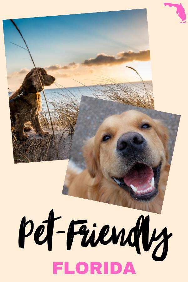 Florida Pet Friendly Tips Dog Friendly Vacation Pet Friendly Vacations Dog Friends