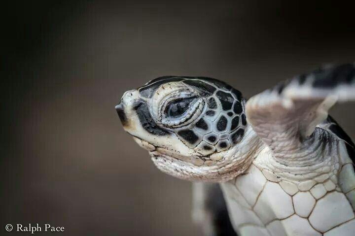 I turtles