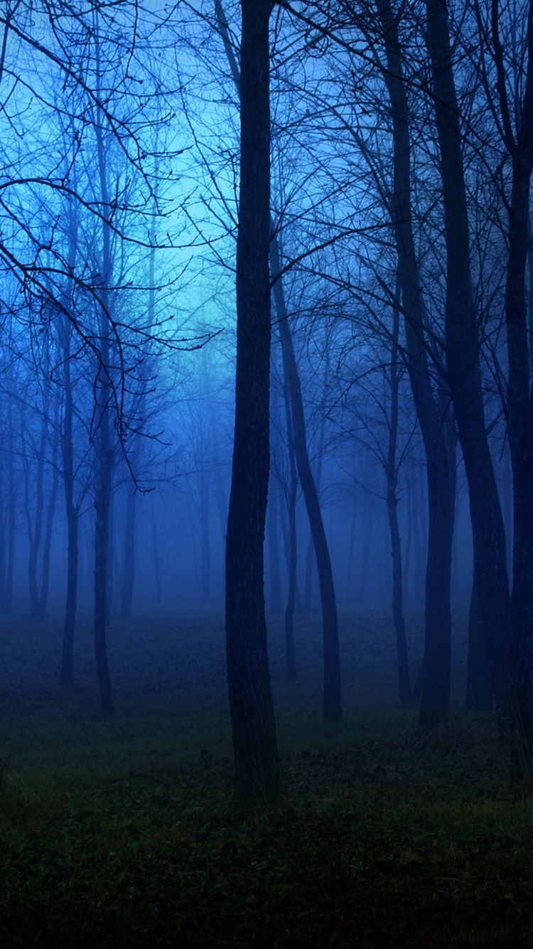 Download Creepy Forest Night Fog IPhone 6 Wallpaper