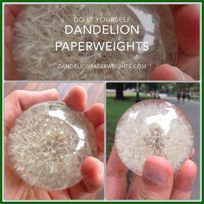 DIY Dandelion Paperweight is part of Dandelion paperweight, Diy resin crafts, Flower resin jewelry, Epoxy resin crafts, Epoxy resin diy, Resin diy - How to Make a Dandelion Paperweight from Kirby J on Vimeo  This should work with any dried flower  The resin dye (CASTIN CRAFT Casting Epoxy Resin Opaque Blue Pigment Dye), should come with directions of its own
