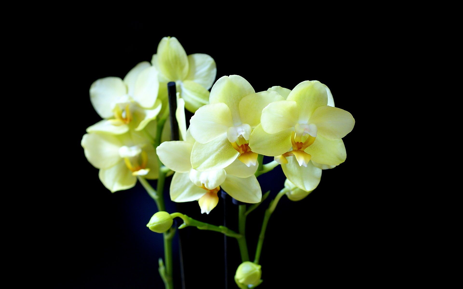 Orchids Over The Rainbow Pinterest Orchids Flowers And Bloom