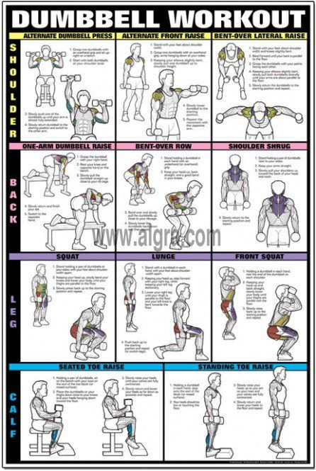 Dumbbell workout chart back and shoulder workouts pinterest