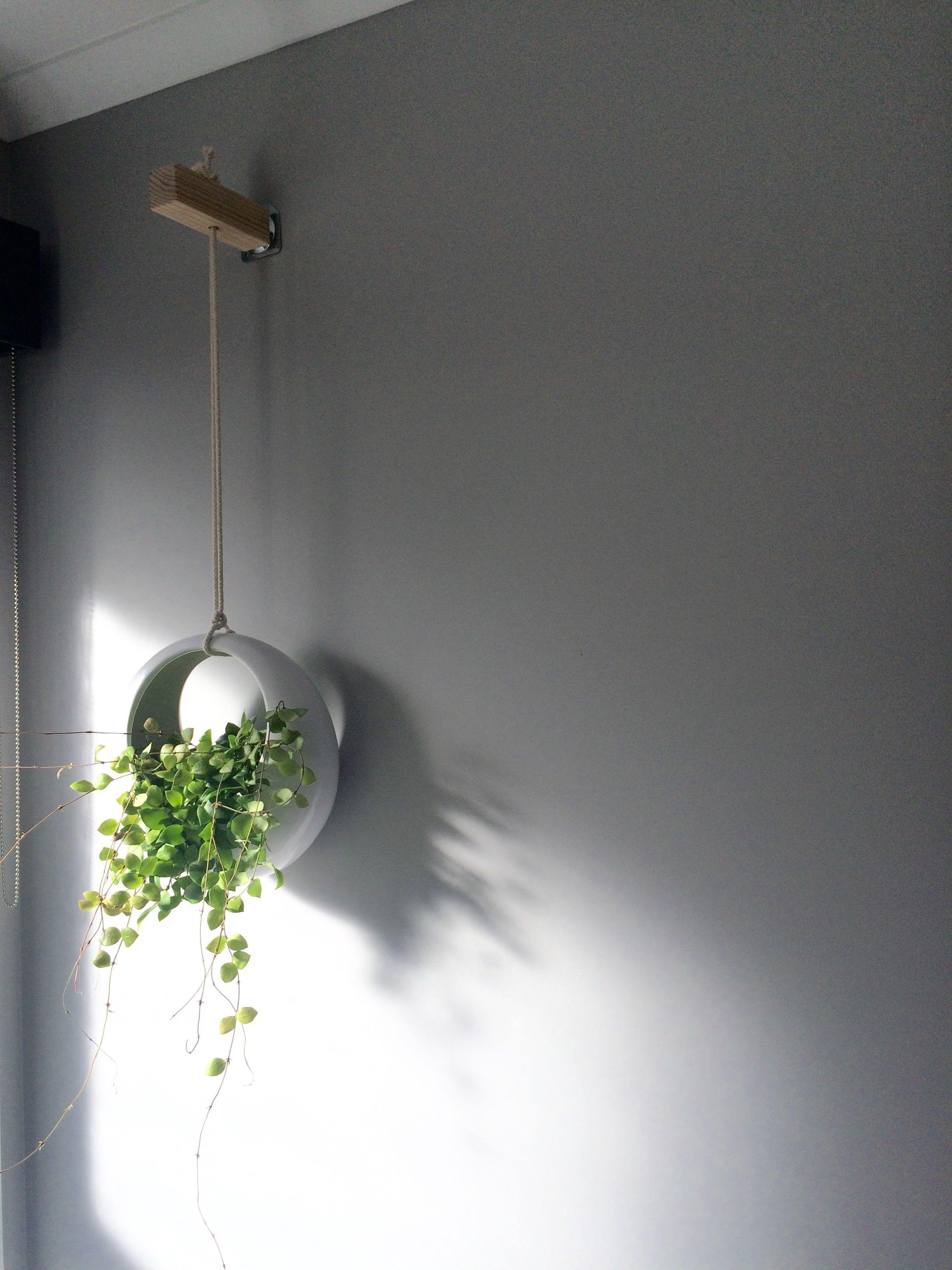 Hanging Pot In Bathroom Kmart Bathroom Plants Decor Plant Decor Bathroom Plants
