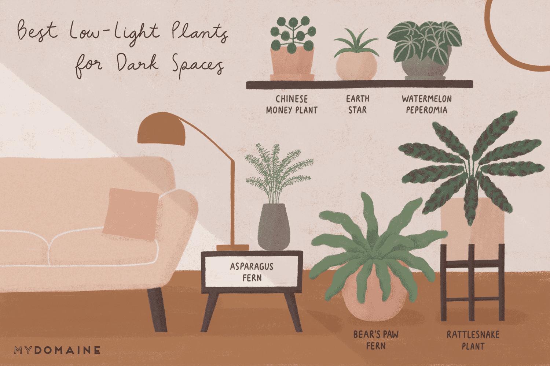 Plot Twist These 15 Low Light Plants Actually Crave Dark 640 x 480