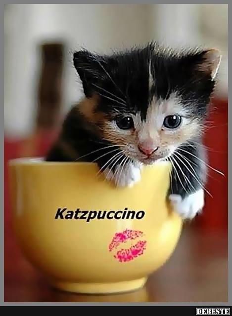 Katzpuccino.. Lustige Bilder, Sprüche, Witze, echt