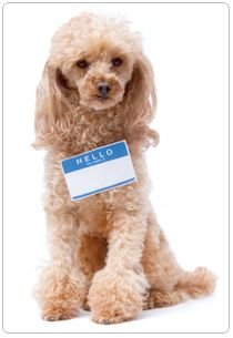 Tips For Teaching Your Dog His Name Embrace Pet Insurance Best Pet Insurance Dogs