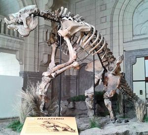 30f9a52305a8f Solving the mystery of Megatherium diet.