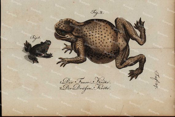 Amphibians hand colored engraving from Natural by Printvilla4you