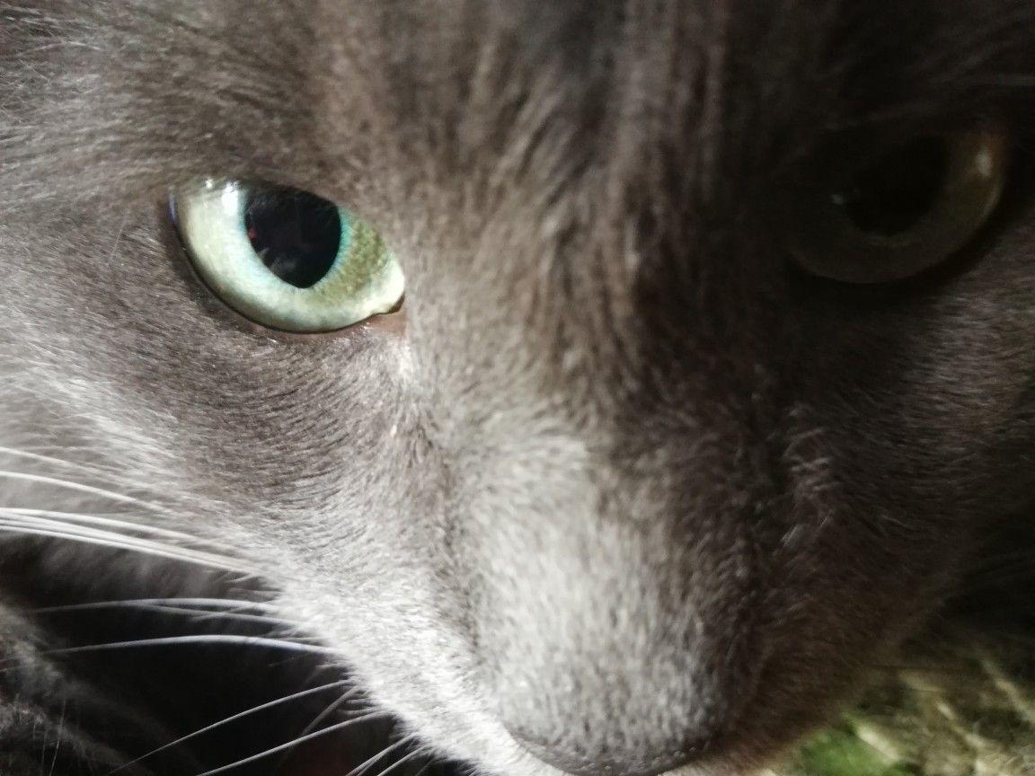 Renklicizimler adlı kullanıcının Kediler panosundaki Pin