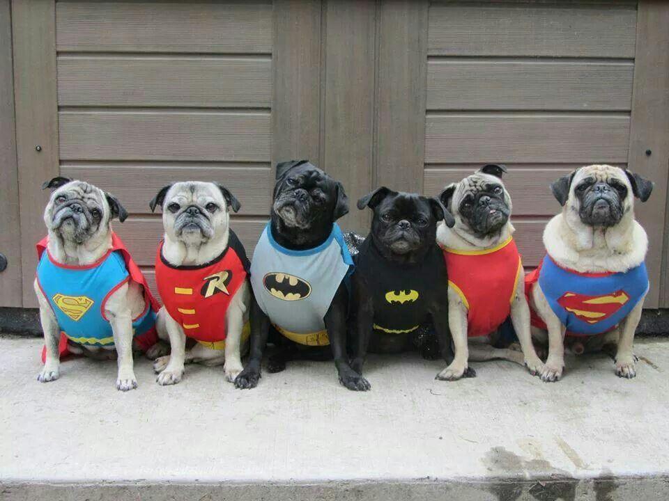 Super Pugs!