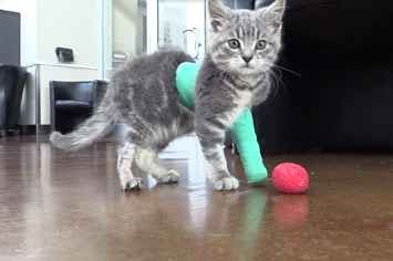 This Brave Kitten And His Tiny Cast Will Melt Your Heart Kitten Cats Cast It Cast