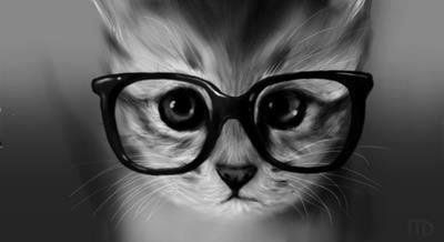 Fond D Ecran Style Swag Recherche Google Gato Con Gafas Fotos Con Gatos Gato Sofisticado