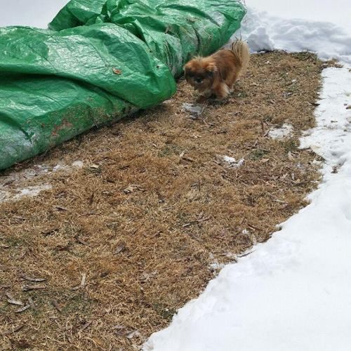 From Kentucky Humane Society Life Hack For People With Small Dogs Next Time Lay Down A Tarp Over An Area Near Your Do Dog Potty Area Dog Bathroom Dog Area