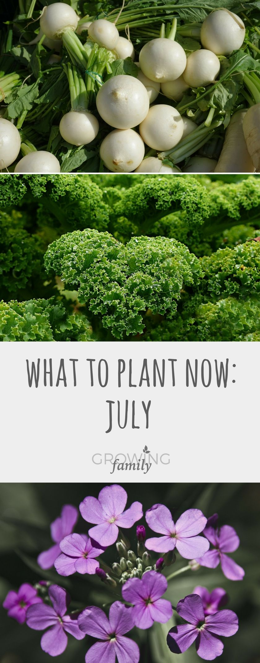 Gardening Calendar What to Plant in July Growing Family