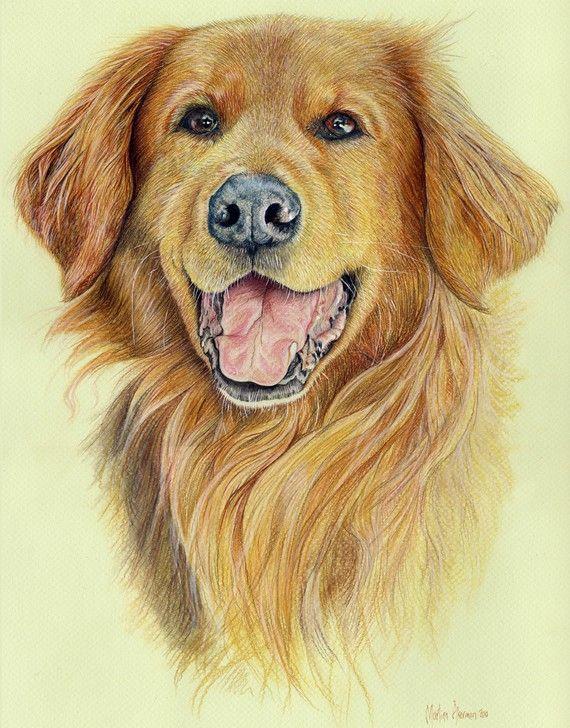 Pastel And Colored Pencil Dibujos De Perros Pintura Perro
