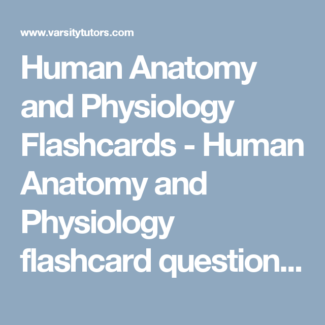 Human Anatomy and Physiology Flashcards - Human Anatomy and ...