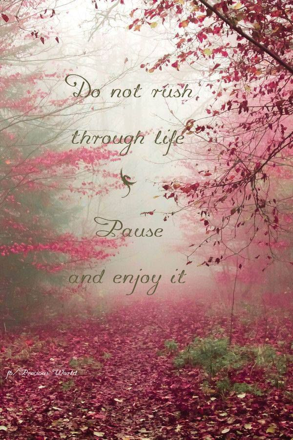 Do not rush through life. Pause and enjoy it. ~