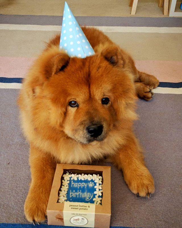 Resultado de imagen para chow chow happy birthday