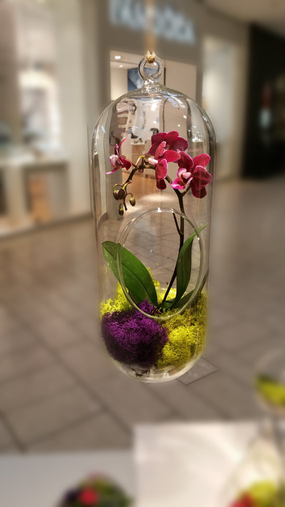 Orchid Live Plant Terrarium Glass 12 Inch / Wedding ...