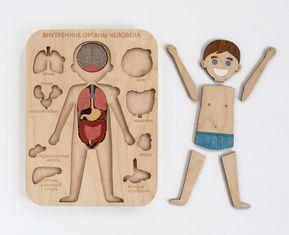 Photo of Cuerpo humano madera órganos internos Montessori juego de anatomía ciencia jugar madera cuerpo humano juego médico conjunto educación en el hogar