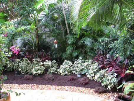 Fl plants low maintenance wild coffee florida thatch for Low maintenance tropical garden