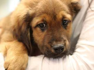 Risks Of Buying Dogs Online Monday At 10 Losing A Pet Puppies Puppy Names