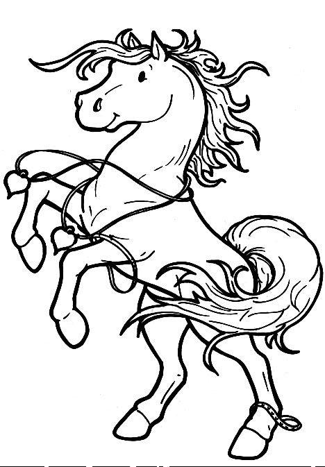 .horse