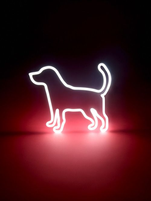 Neon Dog Sign ๑ Mustbasign ੫ ŧ β A ᖮჂ