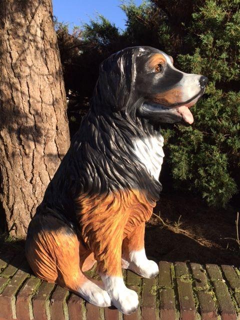 Berner Sennen Bernersennen Berner Sennenhund Lebensgrosse