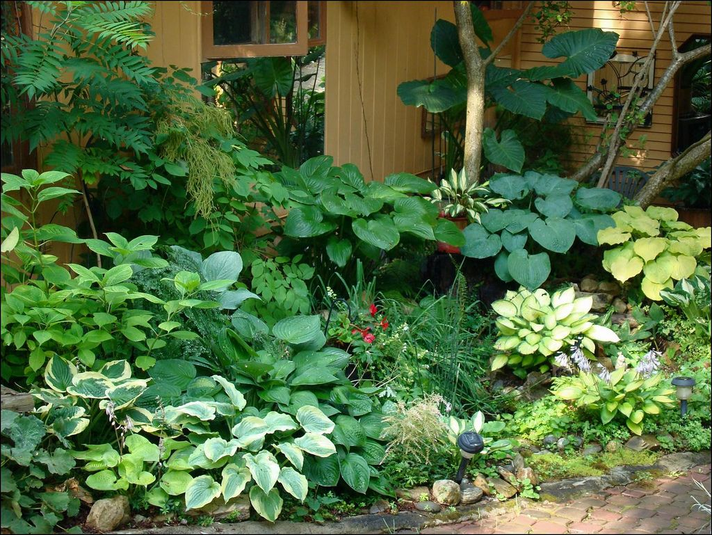landscaping ideas north side