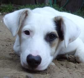 Dottie Is An Adoptable Border Collie Dog In Bremerton Wa Please
