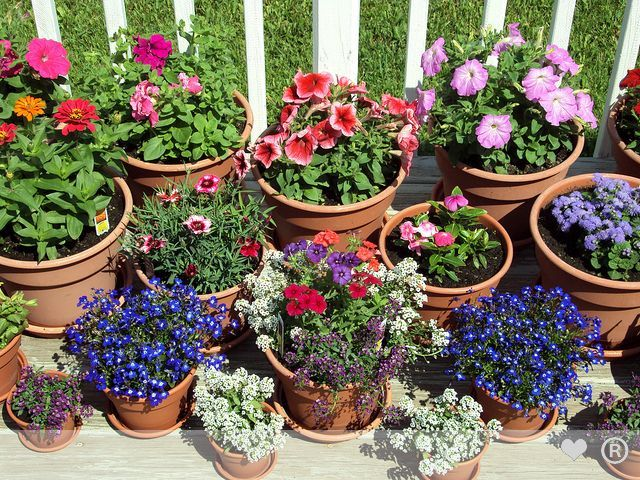outdoor flower pots google search - Flower Garden Ideas In Pots