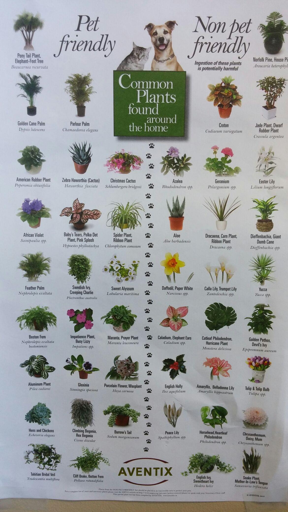 Wpid 20150620 091855 Jpg 1 170 2 080 Pixels Plants Poisonous Plants Outdoor Plants