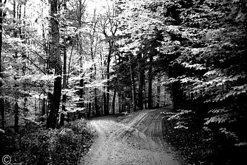 가지 않은 길 로버트 프로스트 노란 숲 속에 길이 두 갈래로 갈라져 있었습니다. 안타깝게도 나는 두 길을 갈 수 없는 한 사람의 나그네라, 오랫동안 서서 한 길이 덤불 속으로 꺾여 내려간 데까지 바라다볼 수 있는 데까지 멀리 보았습니다. 그리고 똑같이 아름다운 다른 길을 택했습니다. 그럴 만한 이유가 있었습니다. 거기에는 풀이 더 우거지고 사람의 자취가 적..