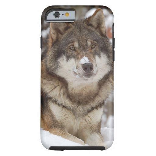 Winter Wolf iPhone 6 Case | Zazzle.com