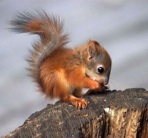 baby eichhörnchen | Animaux les plus mignons, Bébé ...