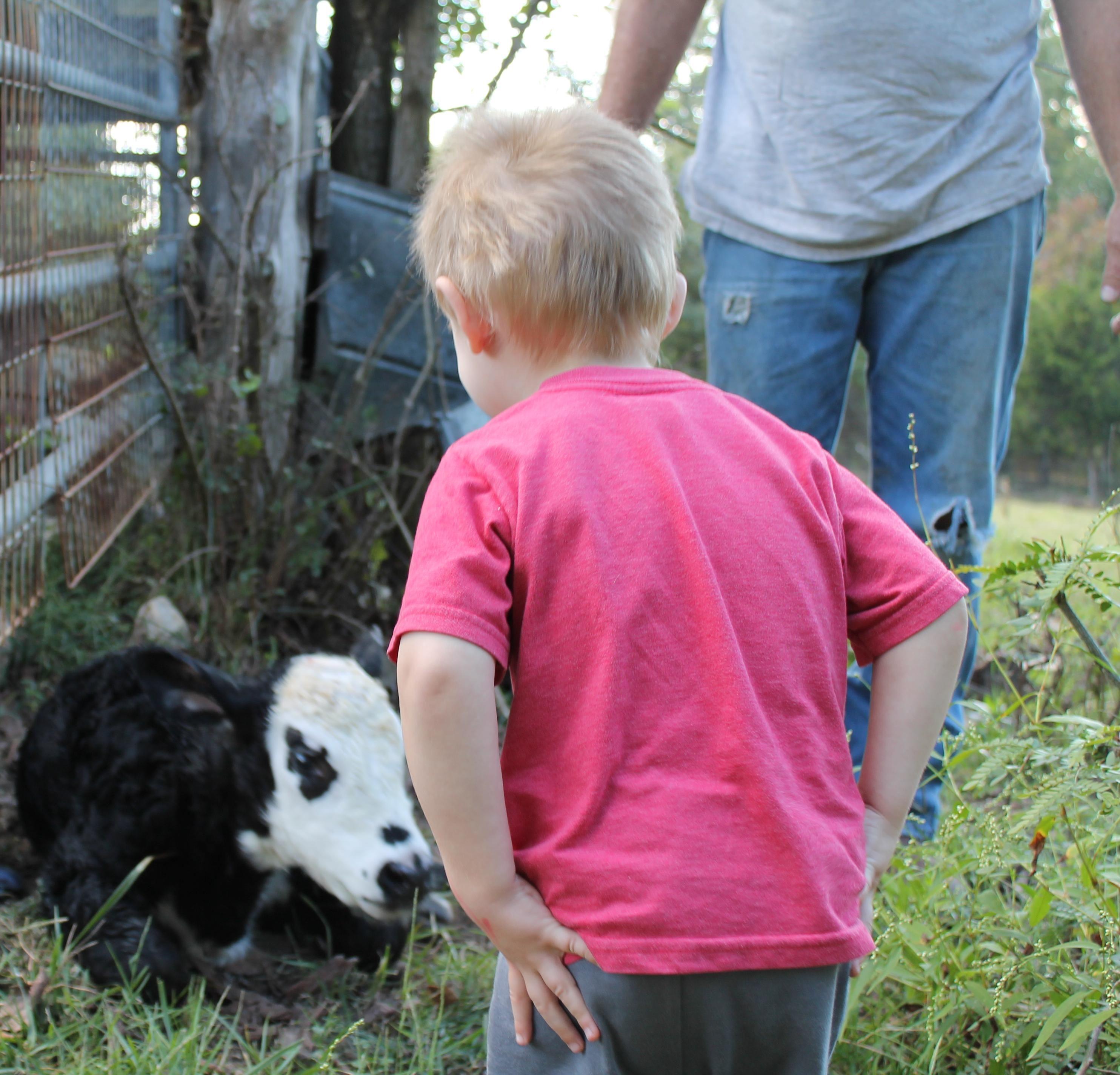 Scion Meets Baby Tiggle Annabelle S Baby Boy Holstein Friesian Calf Animals Friesian Dogs